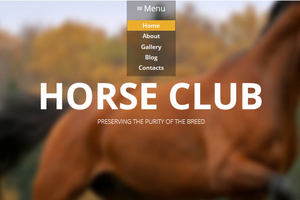 Luxury Horse Breed Care