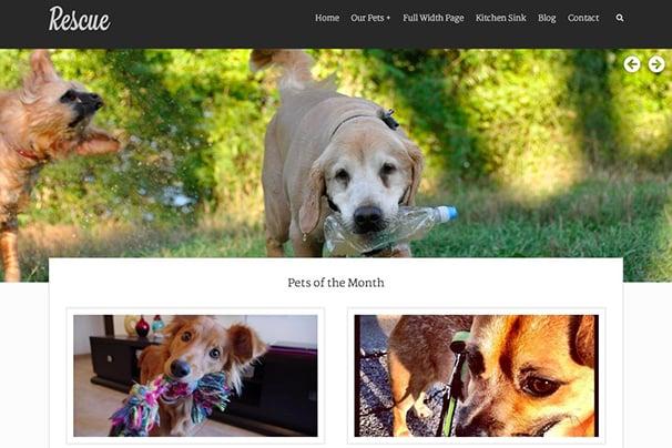 Rescue - Animal Shelter